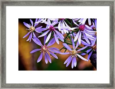 Purple Flowers Framed Print by Andre Faubert