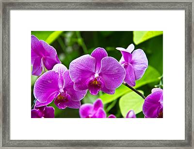 Purple Flowers In A Bunch Framed Print