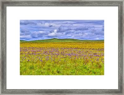 Purple Flowers On The Prairie Framed Print by Jen TenBarge