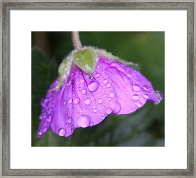 Purple Geranium Detail Framed Print