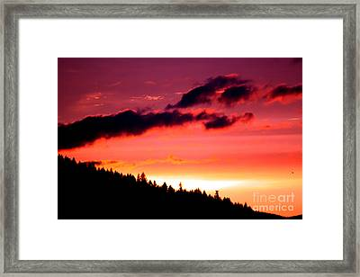 Purple Haze Framed Print by Nick Gustafson