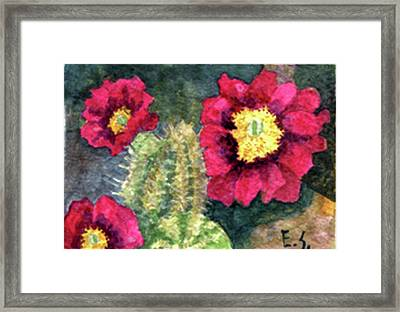 Purple Hedgehog Cactus Framed Print