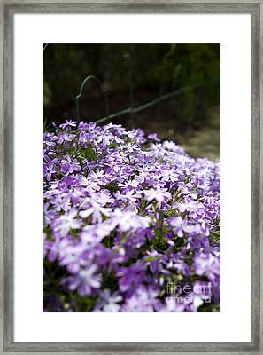 Purple Horizon Framed Print