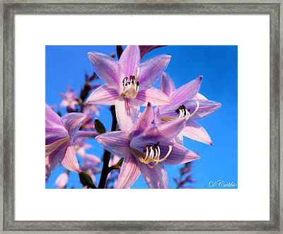 Framed Print featuring the photograph Purple Hosta Blooms by Davandra Cribbie