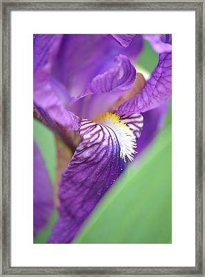 Framed Print featuring the photograph Purple Iris by JD Grimes