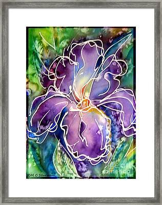 Purple Iris Framed Print by M C Sturman