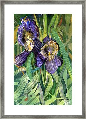 Purple Irises Framed Print by Mindy Newman