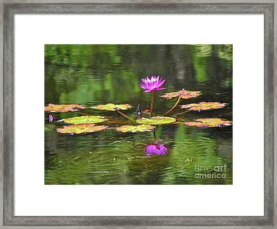 Framed Print featuring the photograph Purple Lily Pad by Eve Spring