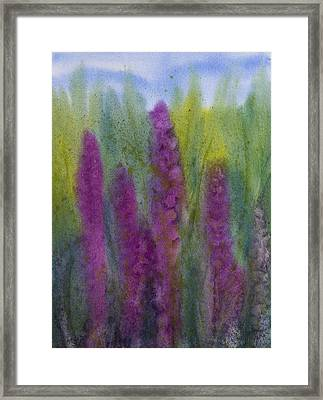 Purple Loosestrife Framed Print by Debbie Homewood