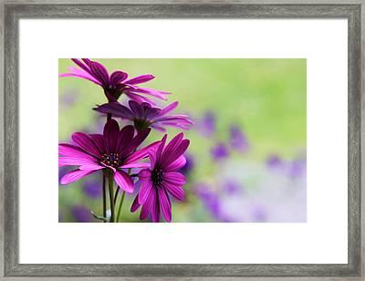 Purple Love Framed Print by Penny Haviland