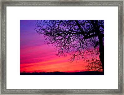 Purple Majesty Framed Print by Brenda Becker