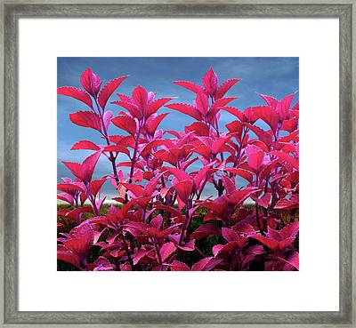Purple Majesty Framed Print by Michael Taggart II