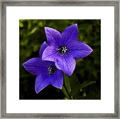 Purple Framed Print by Michael Friedman
