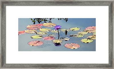 Purple Mirror Framed Print by