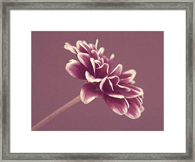 Purple Mum Framed Print by Cathie Tyler