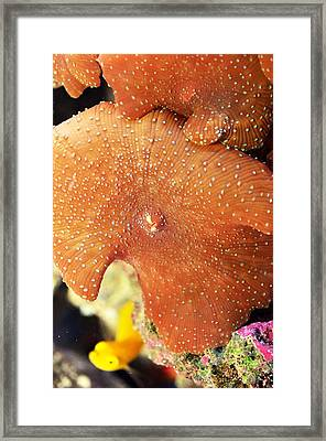 Purple Mushroom  Framed Print by Puzzles Shum