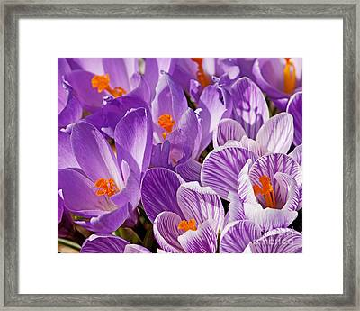 Purple Oh Purple Framed Print