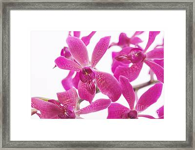 Purple Orchid Framed Print by Atiketta Sangasaeng