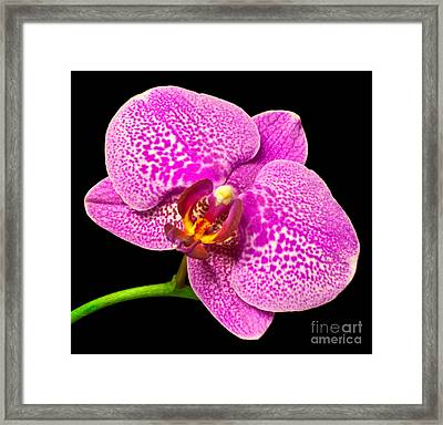 Framed Print featuring the photograph Purple Orchid Bloom by Michael Waters
