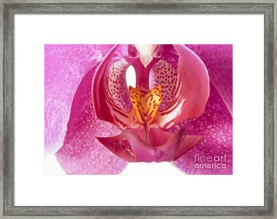 Purple Orchid Macro Framed Print by Blink Images