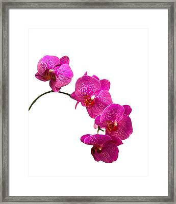 Framed Print featuring the photograph Purple Orchid On White by Michael Waters