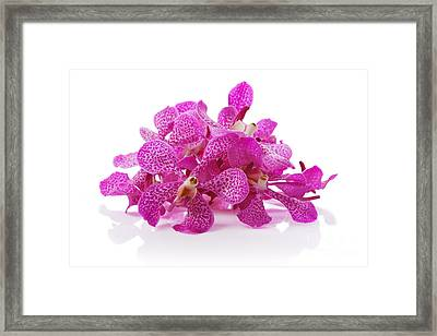 Purple Orchid Pile Framed Print