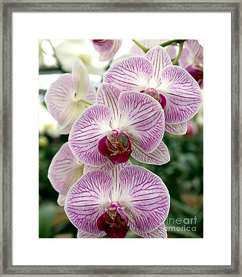 Framed Print featuring the photograph Purple Orchids by Debbie Hart