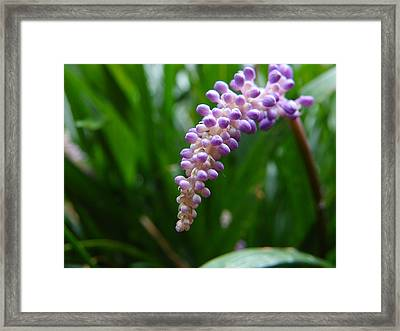 Framed Print featuring the photograph Purple Paradise by Chad and Stacey Hall