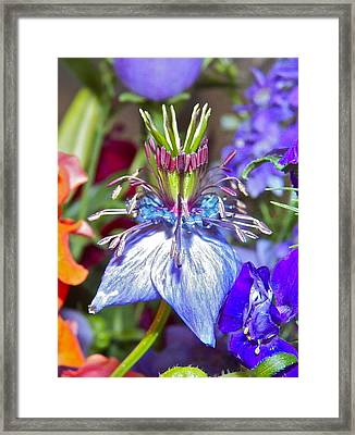Framed Print featuring the photograph Purple Passion by Eve Spring