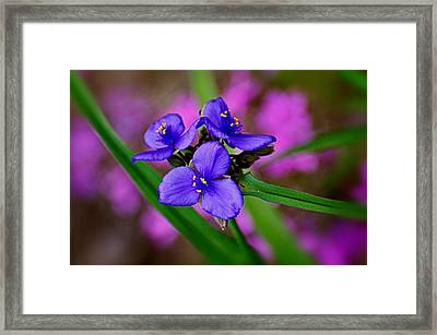 Purple Passion Framed Print by Marty Koch