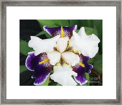 Framed Print featuring the photograph Purple Passion by Michael Waters