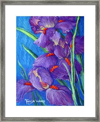 Purple Passion Framed Print by Tanja Ware