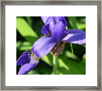 Framed Print featuring the photograph Purple Passion by Tanya Tanski