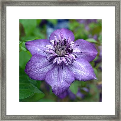 Purple Perfection. Framed Print by Terence Davis