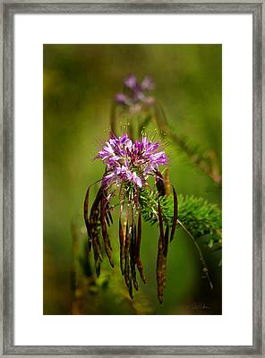 Framed Print featuring the photograph Purple Pizzazz by Vicki Pelham