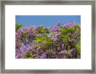 Purple Prelude Framed Print
