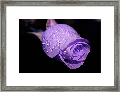 Purple Rain Drops Framed Print