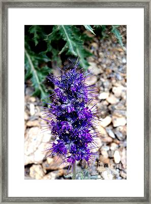 Purple Reign Framed Print