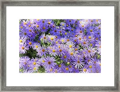 Purple Reigns Framed Print