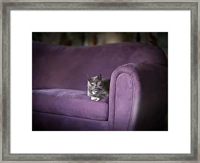 Purple Resplendent Framed Print by Mike Reid