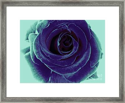Framed Print featuring the photograph Purple Rose by Jasna Gopic