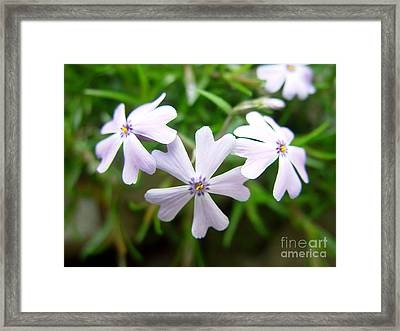 Purple Set Framed Print