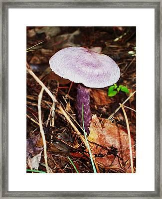 Purple Shroom Framed Print