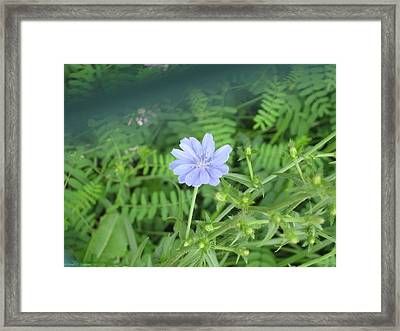Purple Solitaire Framed Print by Sonali Gangane