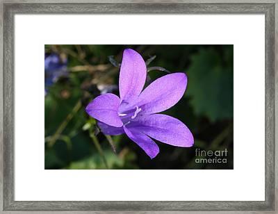 Purple Sparkle Framed Print by Jo