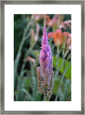 Purple Spear Framed Print by Bonnie Myszka