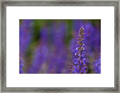 Framed Print featuring the photograph Purple Spires by Trevor Chriss
