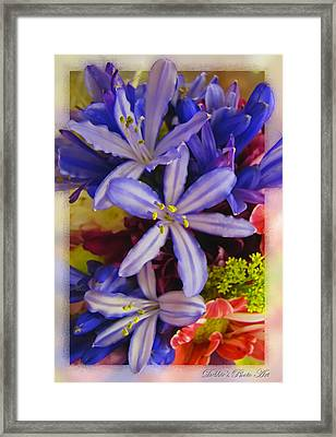 Framed Print featuring the photograph Purple Stars by Debbie Portwood