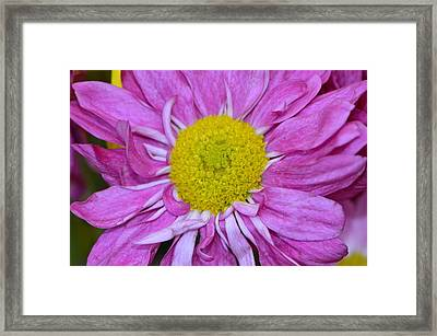 Framed Print featuring the photograph Purple Sunshine by Tanya Tanski