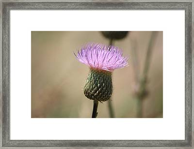 Framed Print featuring the photograph Purple Thistle by Donna  Smith